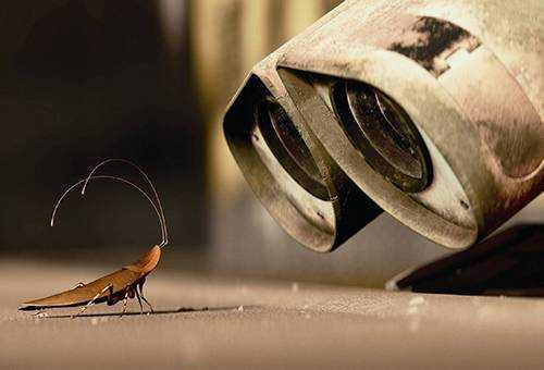 Какие болезни переносят тараканы и чем еще они опасны Как происходит заражение