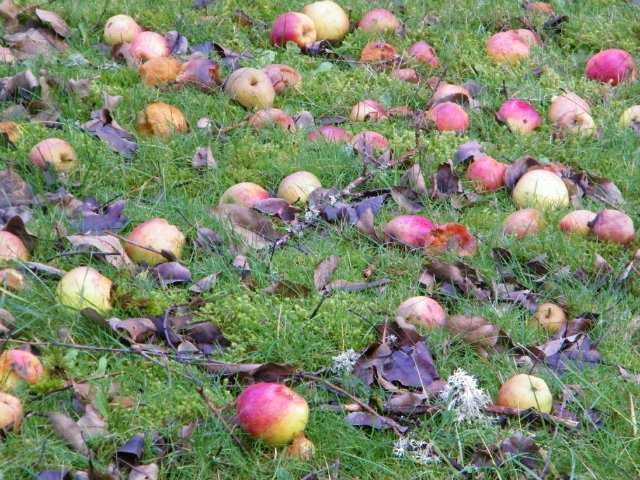 Навигация по записямБорьба с плодожоркой плодовым вредителемНавигация по записям