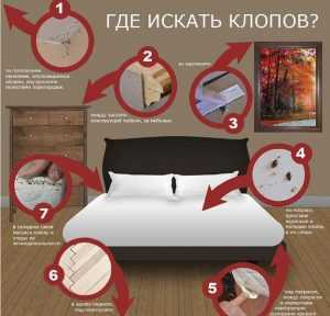 Безопасные средства для травли домашних тараканов