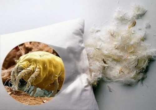 Паразиты человекаКлещ постельный фото