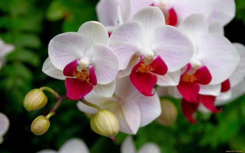 Как избавиться от мошки в орхидее в домашних условиях простые способы