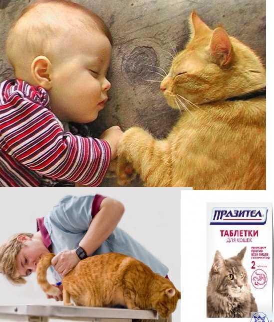 Твой ПитомецПередаются ли человеку глисты кошки Как не заразиться