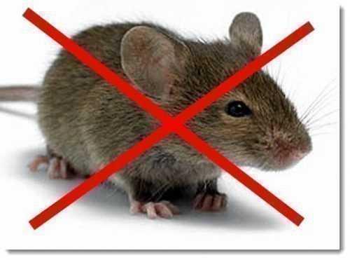 Ультразвуковой отпугиватель кротов и мышей
