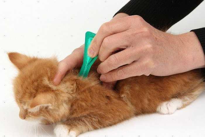 Капли для котят от блох когда давать и какие лучше