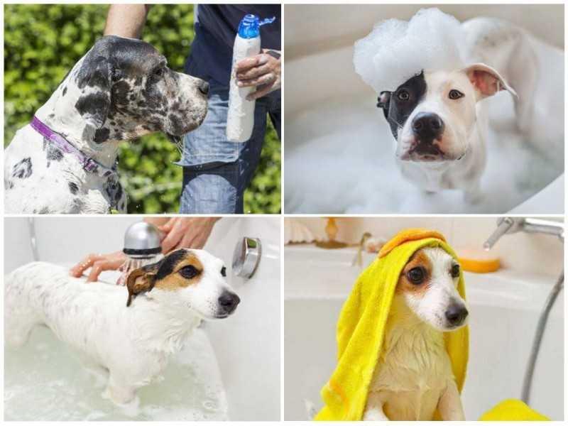 Как использовать шампуни от блох и какой выбрать для собаки