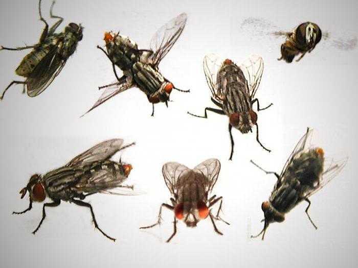 Почему мухи начинают кусаться в августе. Почему мухи осенью кусаются