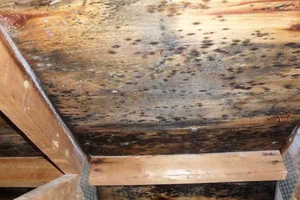 Почему плесень в квартире опасна для здоровья