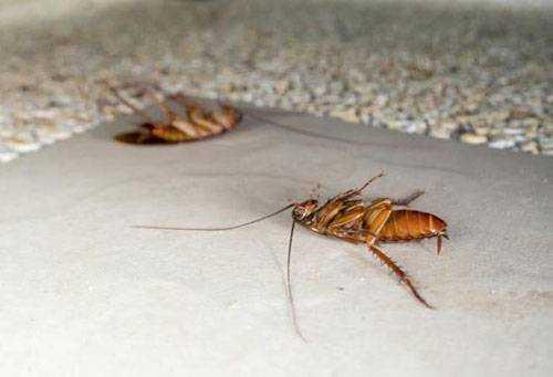 Чего боятся тараканы и как с ними бороться в квартире