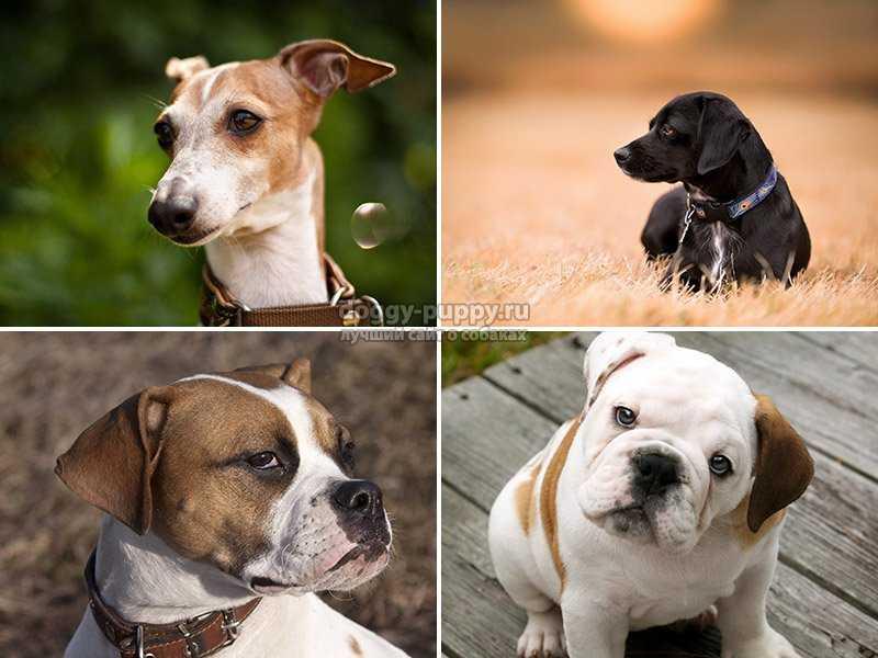 Ошейники для собак от клещей и блох