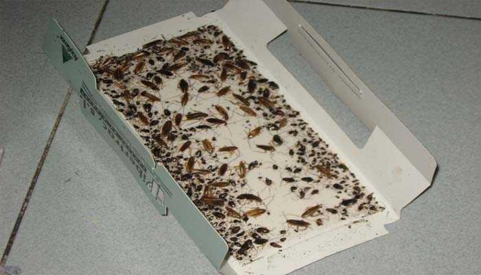 Тараканы миссия Найти и уничтожить