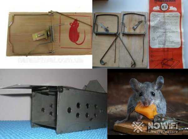 Изготовить самодельную ловушку для мышей несложно