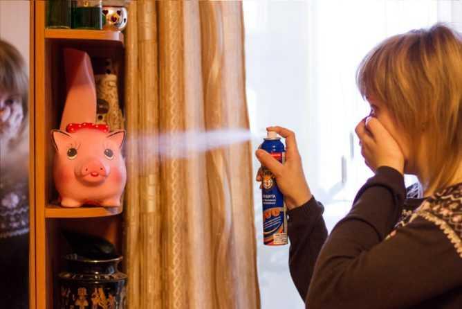 Как избавиться от земляных блох в частном доме или квартире