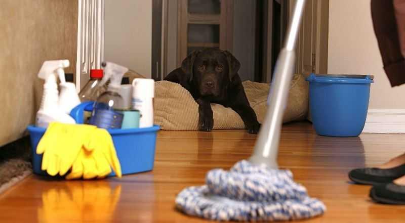 Как избавиться от блох в квартире