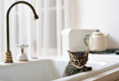 Быстрое и безопасное выведение блох у котенка