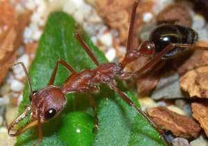 Тема Тип Членистоногие Arthropoda. Класс Насекомые Insecta
