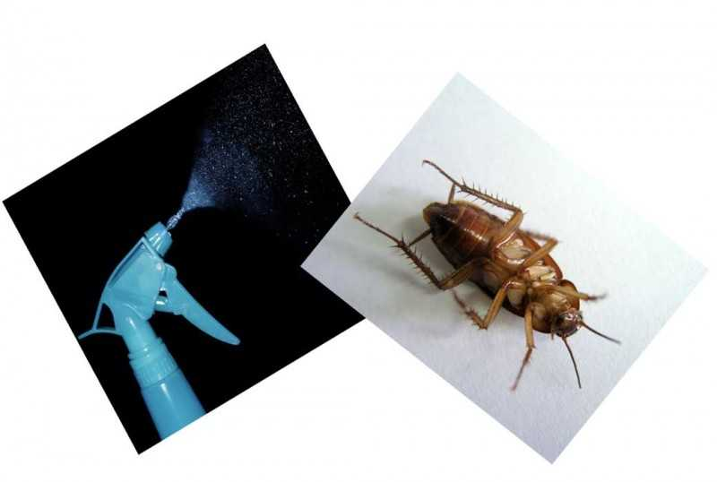 Средство от тараканов Форсайт