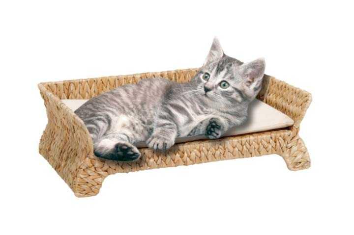 Блошиный дерматит у кошек все что нужно знать о симптомах, диагностике и лечении