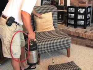 Как избавиться от подвальных блох в доме или квартире, откуда берутся