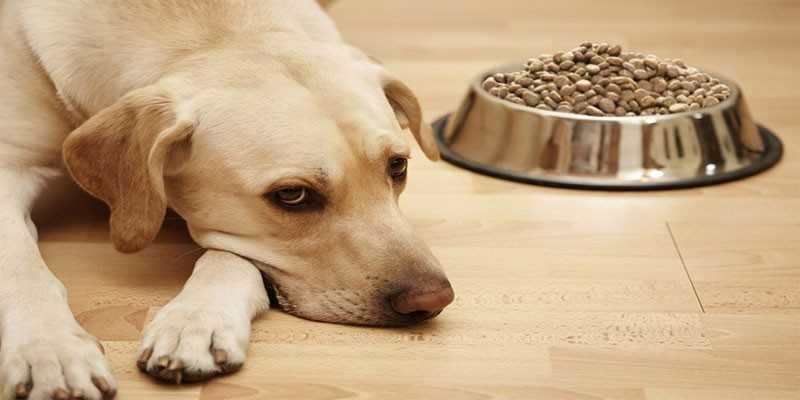 Собаку покусали клещи