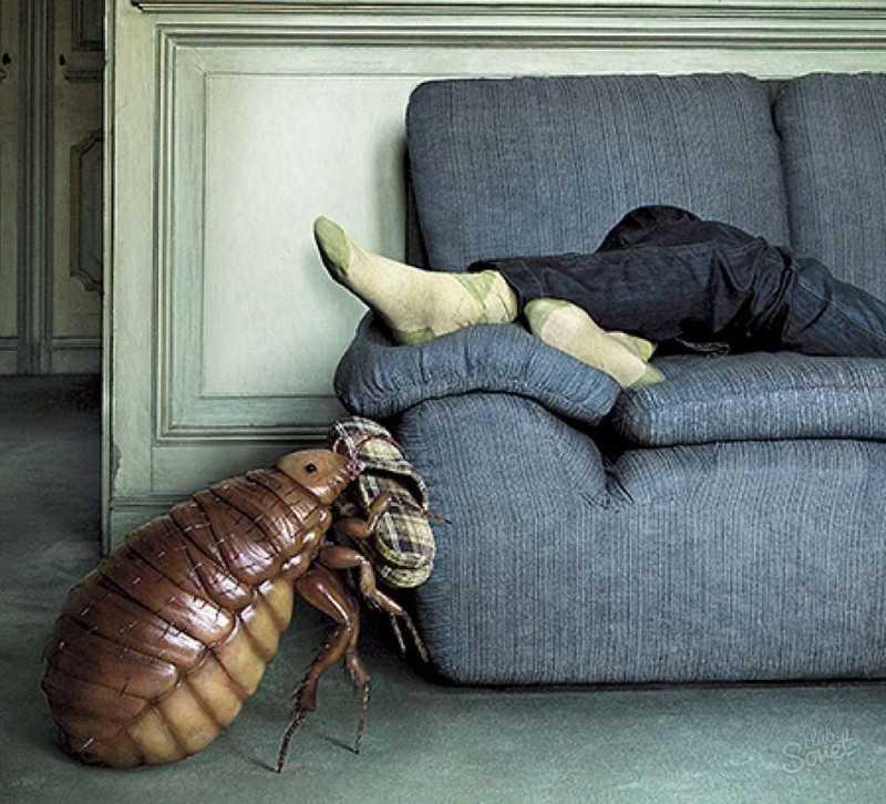 Чего боятся и чем травить постельных клопов