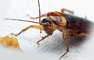 Черные и белые тараканы во сне