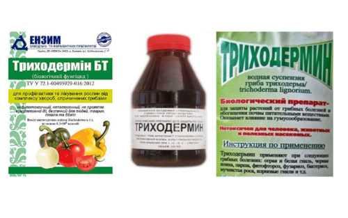 Описание биопрепарата фунгицида Триходермин