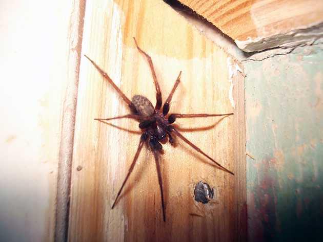 Почему в квартире бывает много пауков