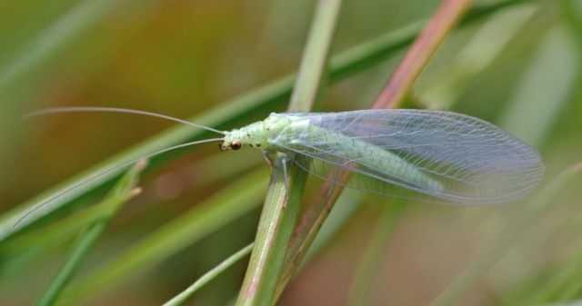 Таблица Отряды насекомых названия, описание, характеристики