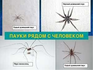 Зеленый паук паутина