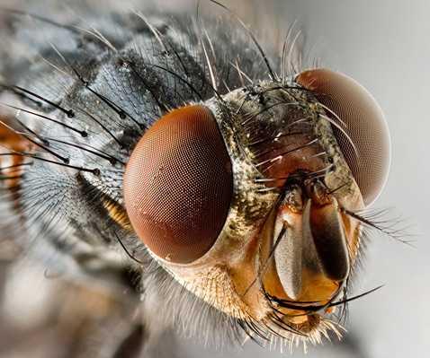 Интересные факты о мухах