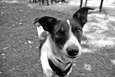 Эффективны ли таблетки от блох для собак в борьбе против паразитов Читайте