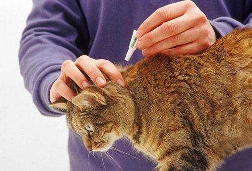 Какие капли от блох использовать для котят, беременных и больных кошек