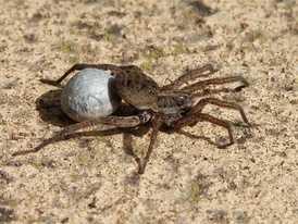 Как сделать паутину из ниток