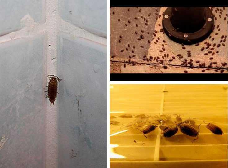 Какие насекомые могут появиться в ванной комнате