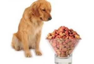 Собака ничего не ест, вялая