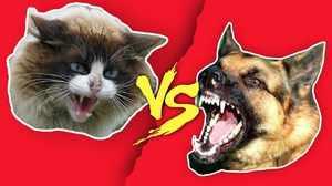 Неприязнь собак к котам - причины и методы преодоления