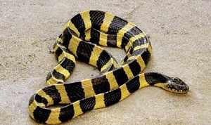 Факты про змей - как отличить ядовитых