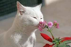 Отпугивающий запах для кошек