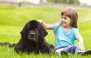 Ньюфаундленд - лучшая собака для ребенка