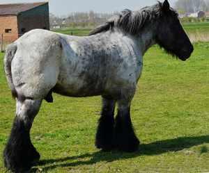 Как содержать породу лошадей