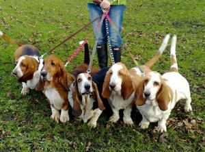 Закон регламентирует правила, как выгуливать собаку