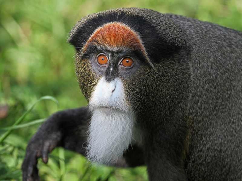 Необычные виды обезьян