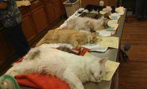 В ветеринарной клинике