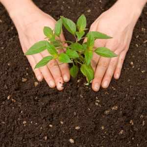 Садить дерево в память о собаке