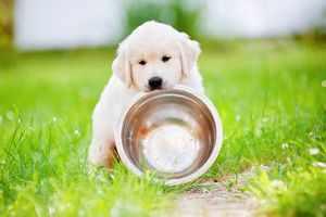 Кормление щенка-витамины