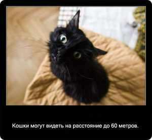 Кошки видят на расстоянии до 60 метров