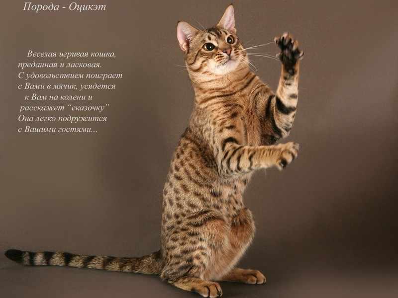 Внешние данные кошек