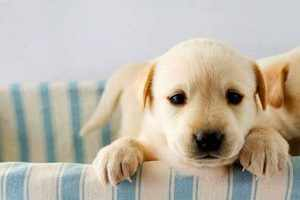 Как назвать щенка судя по характеру
