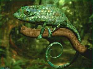 Рептилии и их группа