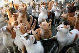 Препараты для котов